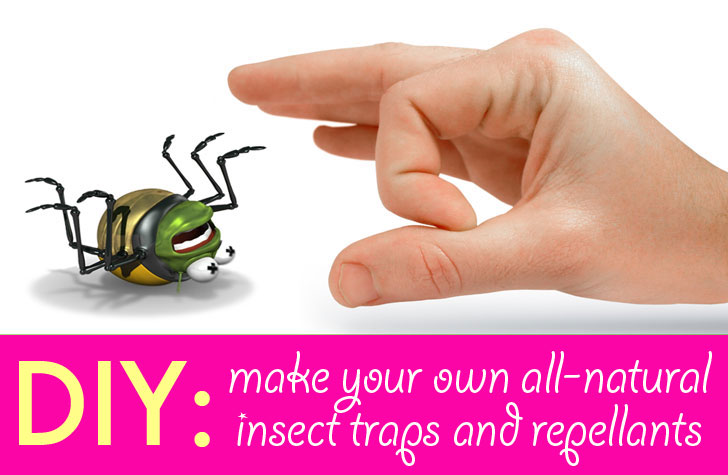 How To Get Rid Of Big Roaches Naturally