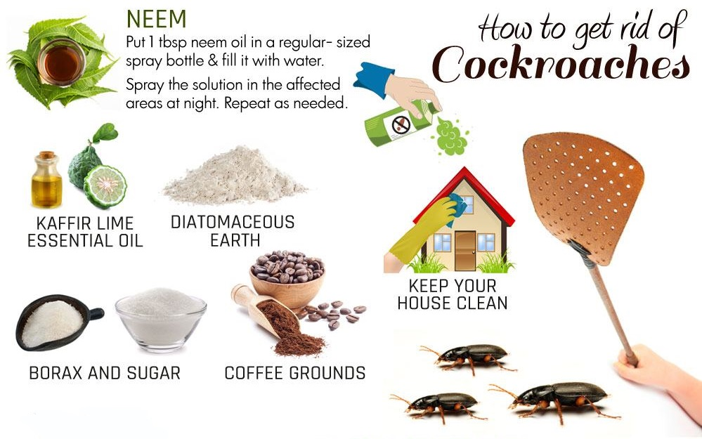 Natural Remedies To Get Rid Of Cockroaches