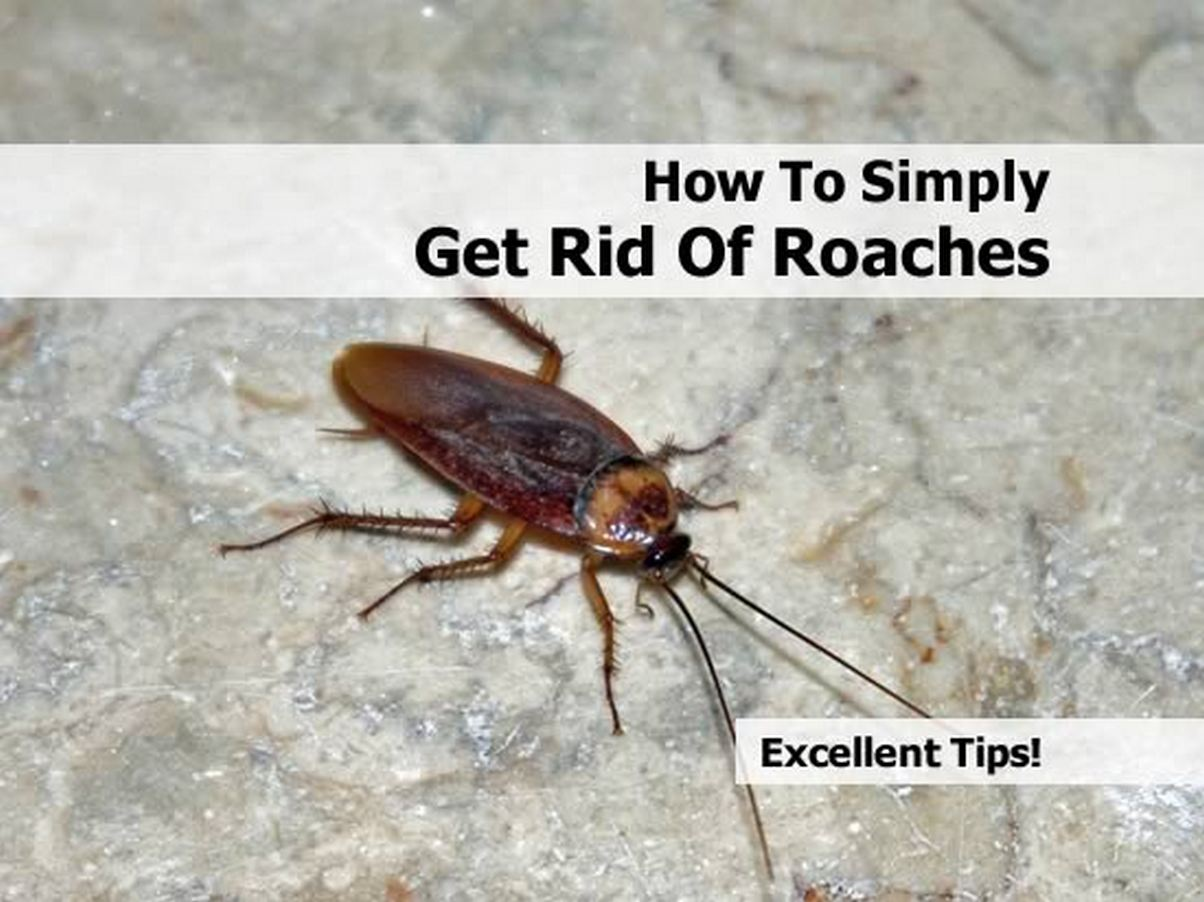 How To Get Rid Of Cockroaches At Home Naturally